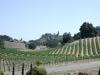 Många lantbrukare har börjat odla vin i stället för olika sädesslag