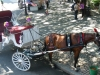 Horse and wagon to walk the central park