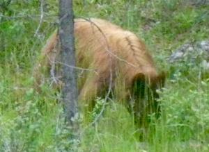 Björn - 1