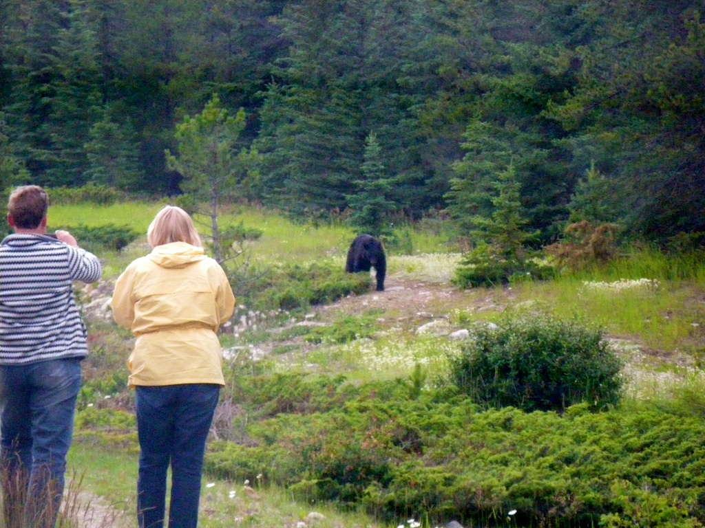 Karin and Emma taking pictures of a black bear