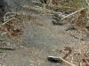 Ödlor som vi såg i vägkanten